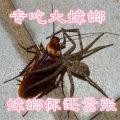 Other reptiles / buzzers 2-5cm 6-8cm 9-12cm baiegaojiao GHJYGF20180418