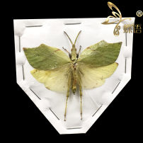 Other reptiles / buzzers Single (spread wings) Butterfly language