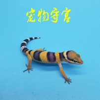 Other reptiles / buzzers High yellow orange practice Shougong (different products contact customer service) feeding package climb sand 1200g