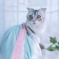Pet clothing / raincoat currency Dress Meng Ruidi princess