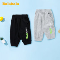 trousers Bala male 90cm,100cm,110cm,120cm,130cm Black boy, light grey boy, light grey girl, black girl summer Cropped Trousers leisure time There are models in the real shooting Sports pants Leather belt middle-waisted Cotton blended fabric Don't open the crotch other Chinese Mainland