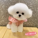 Pet clothing / raincoat currency other Dudu house princess Pink sleeves