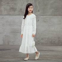 Dress white female Other / other 120cm,130cm,140cm,150cm,160cm,165cm Cotton 100% autumn Korean version Long sleeves Lace other CS-204 Class B 8 years old Chinese Mainland