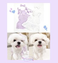 Pet clothing / raincoat currency Dress S,M,L,XL,XXL Other / other princess White, light purple