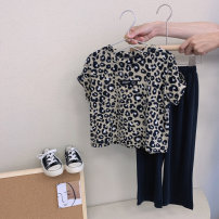 suit Other / other Leopard print two piece set , Leopard print two piece set ~ Pre sale 100cm / tag 5110cm / tag 7120cm / tag 9130cm / tag 11140cm / tag 13150cm / tag 15 female summer Korean version Short sleeve + pants 2 pieces routine Socket nothing Leopard Print cotton children A9550 Other 100%