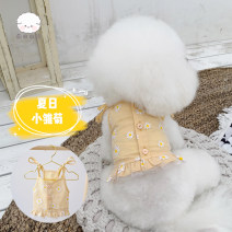 Pet clothing currency Daisy yellow