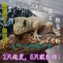 Other reptiles / buzzers Larval (4-7cm) sub adult (7-10CM) Adult (10-14cm) Tenebrio molitor 500 (2-3cm) feeding suit (random color) gecko trunk