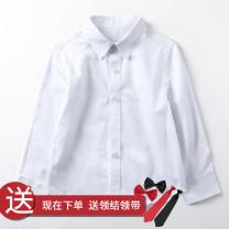 shirt Glourkids / gromi male 100cm 110cm 120cm 130cm 140cm 150cm 160cm No season Long sleeves leisure time Solid color cotton Lapel and pointed collar Cotton 100% CS001 Class B Spring 2020