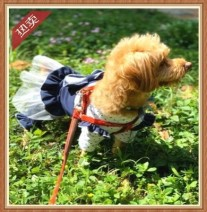 Pet clothing / raincoat Dog Four legged clothes L back length 35 (7-8 kg recommended), XS back length 18 (1-2 kg recommended), XL back length 40 (9-13 kg recommended), m back length 30 (5-6 kg recommended), s back length 25 (3-4 kg recommended) Other / other princess New dog skirt