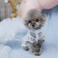 Pet clothing / raincoat currency Dress Other / other princess