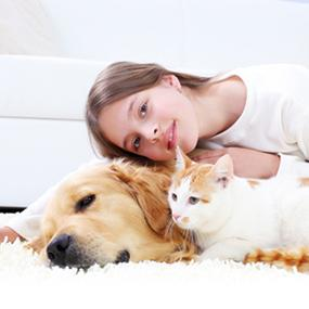 Child with dog and cat on white carpet