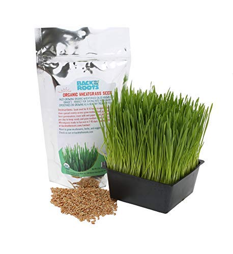 Organic 2lb Cat Wheatgrass Seeds by Back to the Roots – Non-GMO USDA Organic Indoor Growing of Cat Grass Seeds for Natural Hairball Remedy for Cats