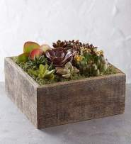 1800Flowers Succulent Centerpiece in Reclaimed Wood Planter by 1-800 Flowers