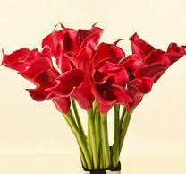 """Meide Group USA 25"""" Large Handmade Real Touch Latex Calla Lilly Artificial Spring Flowers for Arrangements, Bouquets, Weddings, and centerpieces (Pack of 5) (Bright Red)"""