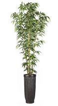 """Vintage Home VHX116214 Bamboo Tree in Natural Poles Planter, 93"""""""