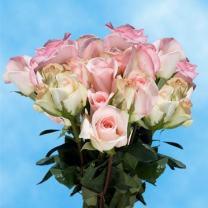 GlobalRose 75 Fresh Cut Pastel Roses - Light Orlando Roses - Fresh Flowers For Birthdays, Weddings or Anniversary.
