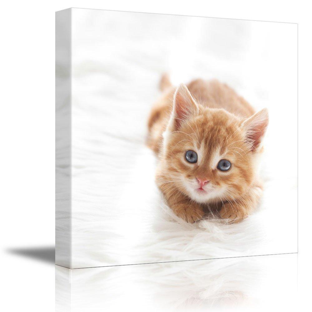 "Cute Little Red Kitten Cat Lies on White Fur Blanket Cute Pet Animal Photograph - Canvas Art Wall Decor - 24"" x 24"""