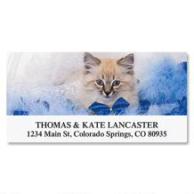 Everyday Cats Personalized Return Address Labels- (12 Designs) Set of 144, Large Self-Adhesive, Flat-Sheet Labels, by Colorful Images