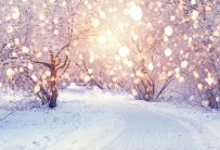 Baocicco Snow Park Ice Freezing Trees Wonderland Backdrop Shiny Halos 7x5ft Cotton Polyester Photography Background Winter Dreamy Landscape Christmas New Year Festival Children Holiday Party