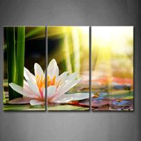 3 Panel Wall Art Beautiful Water Lily Sunshine Painting The Picture Print On Canvas Flower Pictures for Home Decor Decoration Gift Piece (Stretched by Wooden Frame,Ready to Hang)