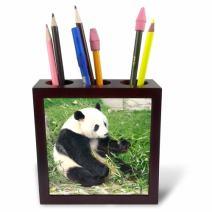 3dRose ph_100290_1 Panda Bear Eating Bamboo, Sichuan Province, China-Tile Pen Holder, 5-Inch