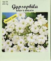 Set of 50 Flower Seed Packets! Flower Seeds in Bulk (50, Baby's Breath Gypsophila)