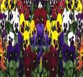 Big Pack - Pansy, Mixed Flower Seed (4,000 Seeds) - Viola wittrockiana 'Swiss Giants' - Edible Flower Seeds by MySeeds.Co (Big Pack - Pansy Mix)
