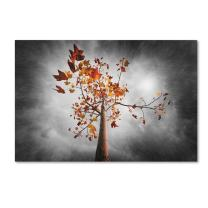 Autumn Rain by Philippe Sainte-Laudy, 30x47-Inch Canvas Wall Art