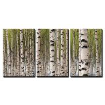 """wall26 - Birch Trees with Green Leaves - Canvas Art Wall Decor -24""""x36""""x3 Panels"""