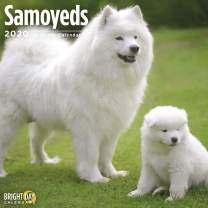 2020 Samoyeds Wall Calendar by Bright Day, 16 Month 12 x 12 Inch, Cute Dogs Puppy Animals Canine