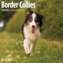 2020 Border Collies Wall Calendar by Bright Day, 16 Month 12 x 12 Inch, Cute Dogs Puppy Animals Colley