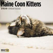 2020 Maine Coon Kittens Wall Calendar by Bright Day, 16 Month 12 x 12 Inch, Cute Cat Animals Fluffy Adorable Feline