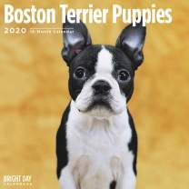 2020 Boston Terier Puppies Wall Calendar by Bright Day, 16 Month 12 x 12 Inch, Cute Dogs Puppy Animals Roundheads American Gentleman Canine
