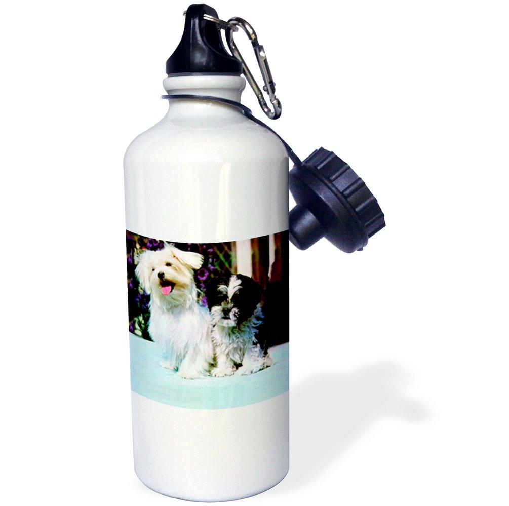 3dRose Maltese Sports Water Bottle, 21 oz, White