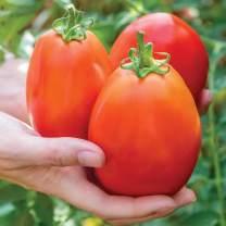 Burpee Gladiator' Hybrid Red Slicing Paste Tomato, 25 seeds
