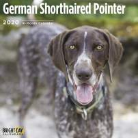 2020 German Shorthaired Pointer Wall Calendar by Bright Day, 16 Month 12 x 12 Inch, Cute Dogs Puppy Animals Canine