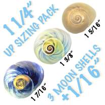 "THE OTHER TIDE Hermit Crab Shells Up-Sizing"" Medium Seashell Pack 3 Colorful Moon Shells +1/16"" increments (Current Shell Width)"