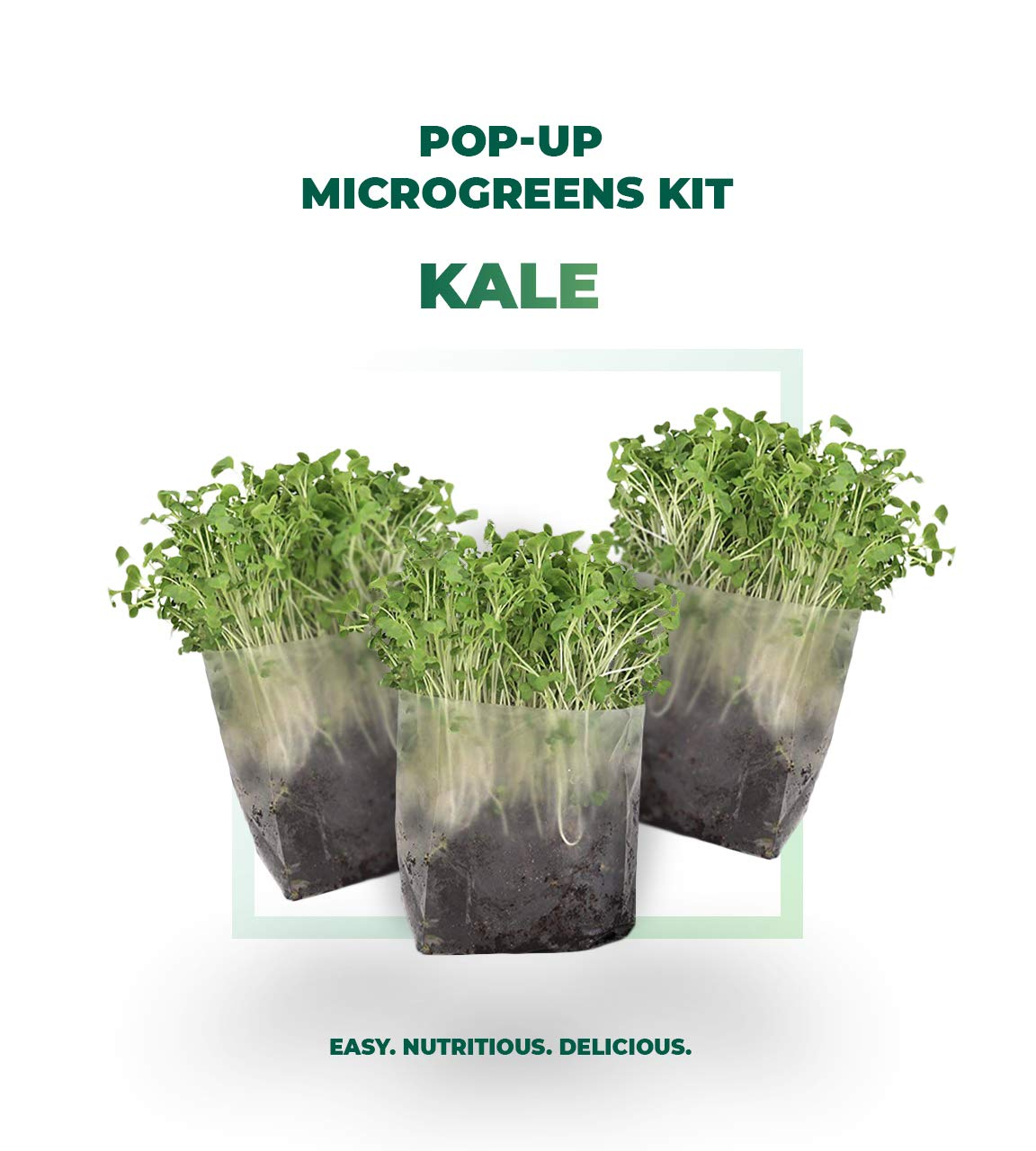 Pop Up Microgreens Kit (Kale) – Just Add Water and Seed. Perfect Size, a Quick, Smart, Nutritious Meal. Includes Fiber Soil in a Bag, Kale Seed. Super Health Benefits, Easy Grow/Delicious.
