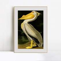 "INVIN ART Framed Canvas Giclee Print Art American_White_Pelican by John James Audubon Wall Art Living Room Home Office Decorations(Aluminum Metal Champagne Frame with Mat & Glass,28""x40"")"