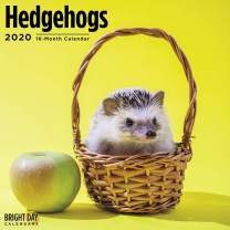 2020 Hedgehogs Wall Calendar by Bright Day, 16 Month 12 x 12 Inch, Cute Animals