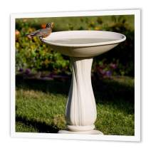 """3dRose ht_206854_3 American Robin at Bird Bath Marion, Illinois, USA. Iron on Heat Transfer, 10 by 10"""", for White Material"""