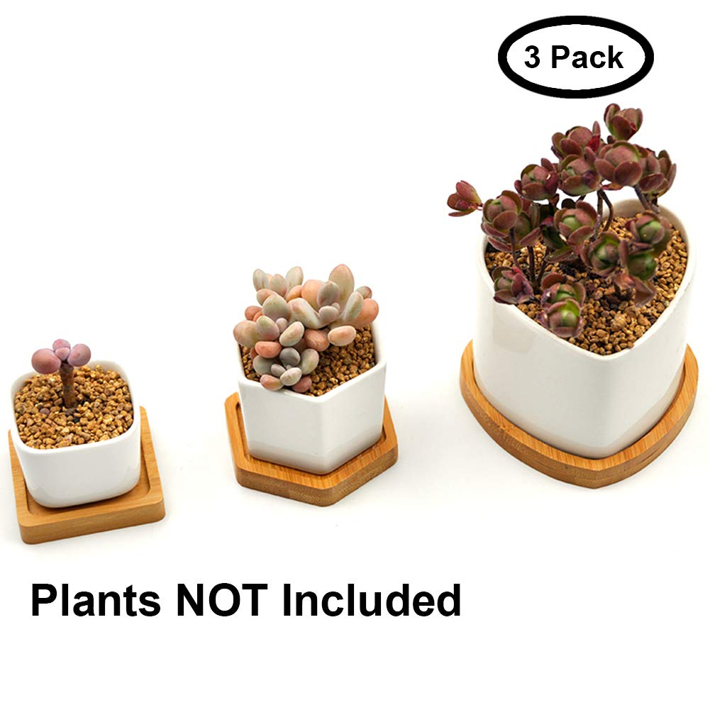 Airmoon Ceramic Succulent Planter with Bamboo Tray,Small Cactus Plant Pot Indoor,White