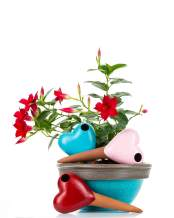 Mushroom Terracotta Watering Globes, 3 Self Watering System Spikes, Automatic Plant Waterer Irrigation Drippers, Plant Watering Wands Indoor Plants, Hanging Pots Outdoor (Hearts, Pink Blue Red)