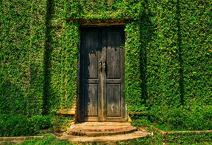 Laeacco Green Ivy Wall Photography Background 10x6.5ft Green Vine Wall Leaves Ancient Wood Door Backyard Wall European Architecture Nature Scenery Plant Textures Backdrops Wedding Party Event