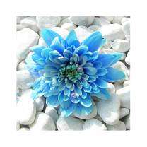 5D Diamond Painting for Adult DIY Full Drill Diamond Art Kits Square Rhinestone Embroidery by Numbers Blue Flower 11.8X11.8inch