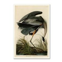 Great Blue Heron by John James Audobon, 16x24-Inch Canvas Wall Art