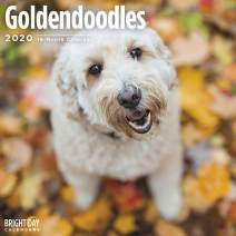 2020 Goldendoodles Wall Calendar by Bright Day, 16 Month 12 x 12 Inch, Cute Dogs Puppy Animals Poodle Doodle Canine