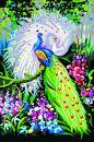 """AOLIGE Acrylic Paint by Numbers for Adults and Kids Large Canvas Wall Art 16"""" x 20"""" (Peacock)"""