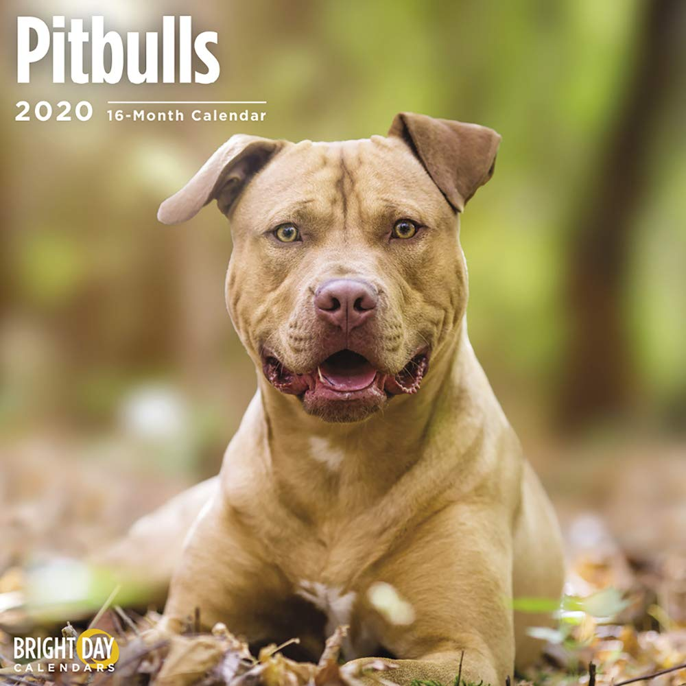 2020 Pitbulls Wall Calendar by Bright Day, 16 Month 12 x 12 Inch, Cute Dogs Puppy Animals Pittie Canine