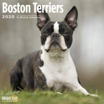 2020 Boston Terriers Wall Calendar by Bright Day, 16 Month 12 x 12 Inch, Cute Dogs Puppy Animals Roundheads American Gentleman